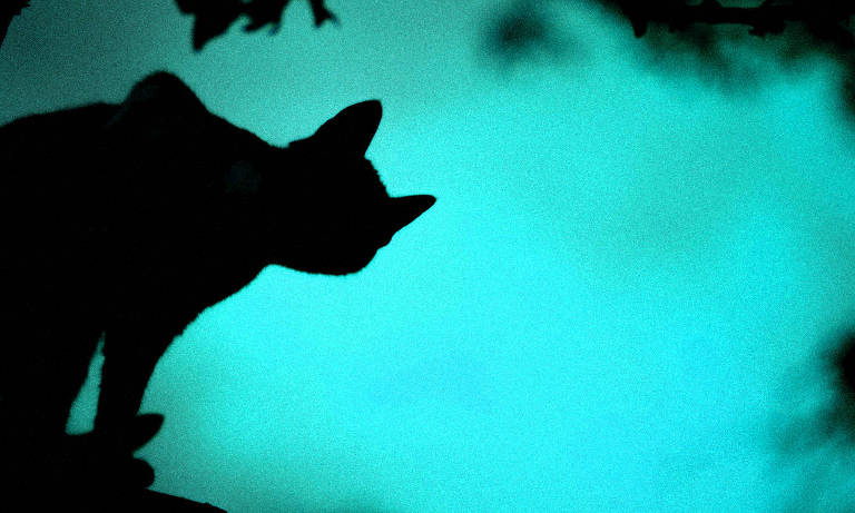 A black cat looks into a demonic shadow