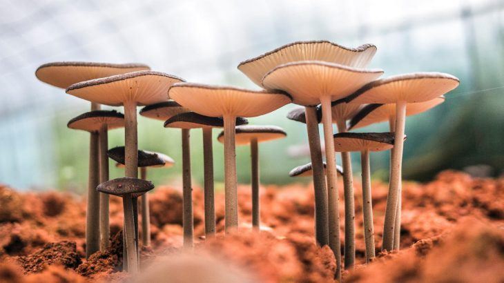 A row of mushrooms