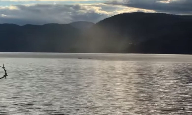 A dark figure in the water - Is this Ogopogo?