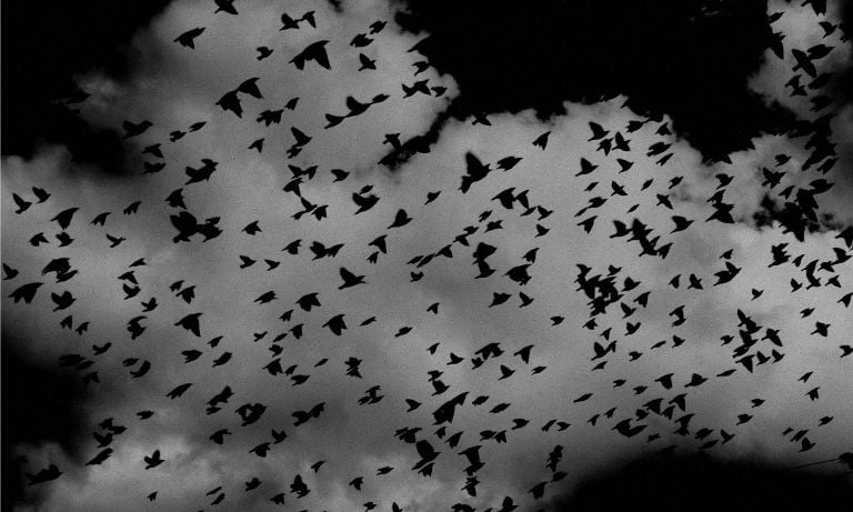 A flock of birds flying under a dark sky