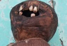 Photo of Weird Coconut Doll With Human Teeth (And Possibly Skin) Found On Florida Beach