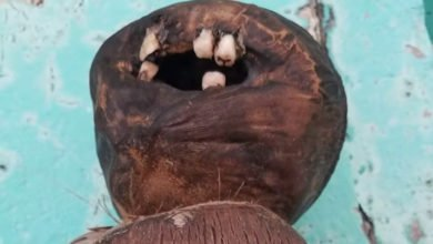 Photo of Weird Coconut Doll With Human Teeth Found On Florida Beach