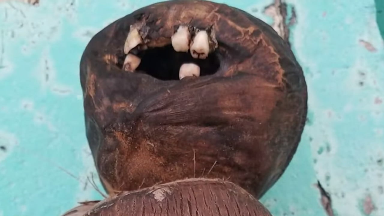 The strange coconut doll with human teeth