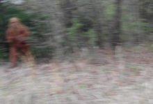 Photo of Recent 'Bigfoot Sightings' Turn Out to Be Social Distancing PSA