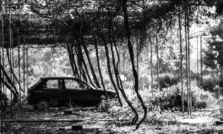 A car in a wooded area