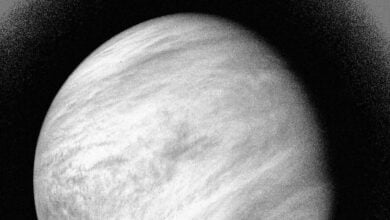 Photo of Astronomers Observe Possible Sign Of Microbial Life On Venus