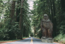 Photo of Sasquatch Statues Remain On High Alert: Santa Cruz Bigfoot Returns Home