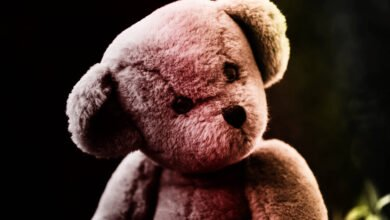Photo of Story Of Haunted Teddy Bear 'Mr. Ted' Finds New Life On TikTok