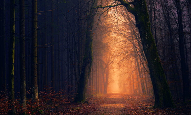 A dimly lit forest road