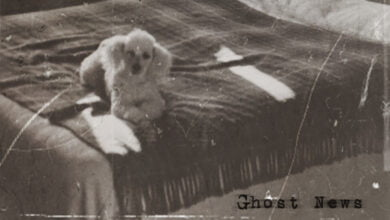 Old photo of a dog on a bed